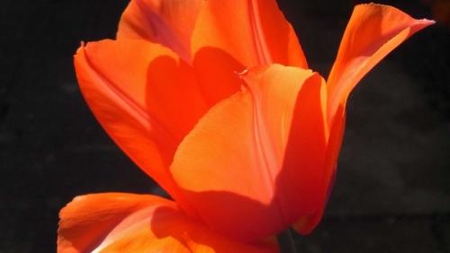 tulipatempleofbeauty