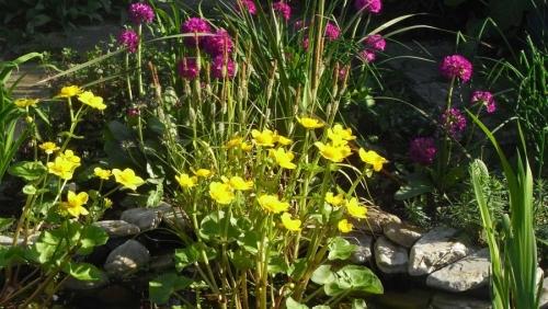pondplants