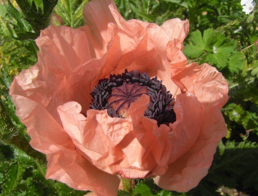 Garden Designer Anna McArthur's favourite flowers